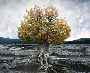 tree-manipulation